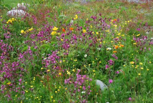 Flowers of Norway