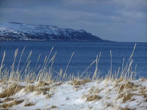Arctic Nature & Landscapes